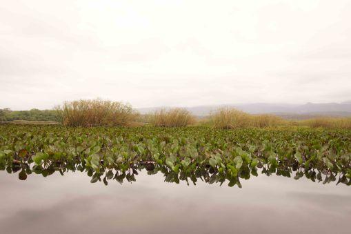 DSC07063 wetlands