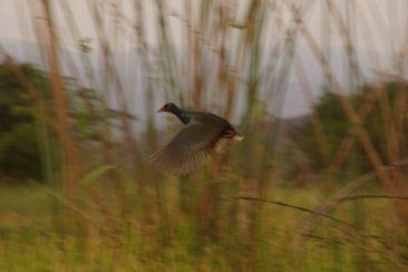 DSC07065 vogel wetlands