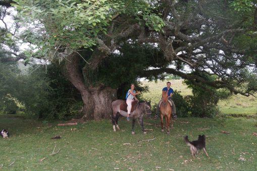 600 jarige boom