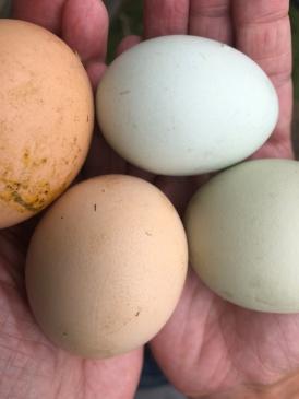 Vers geraapte eieren