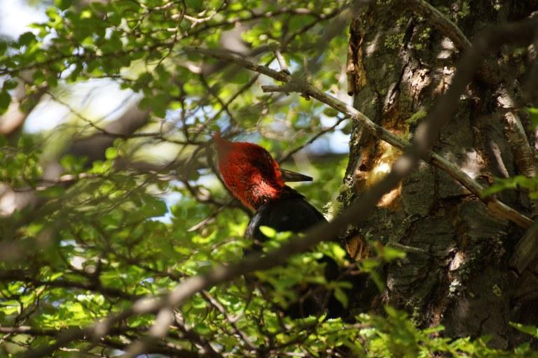 00038 woodpecker2