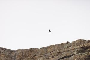 onderweg lake sasja condor