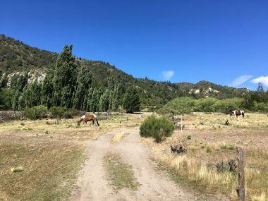 00030 paarden