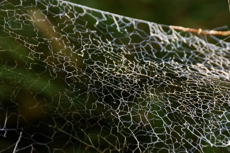 00044 spinneweb