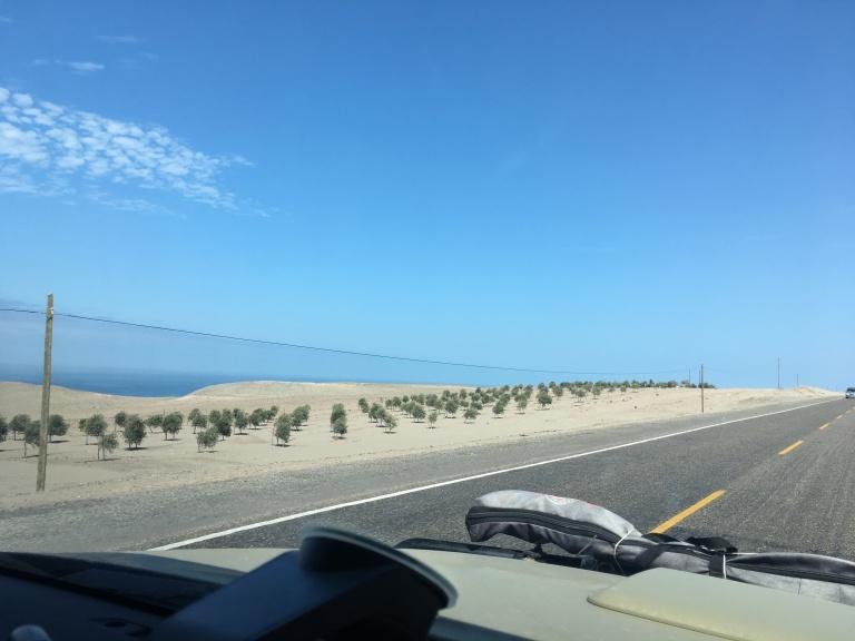 00011 beplantenwoestijn