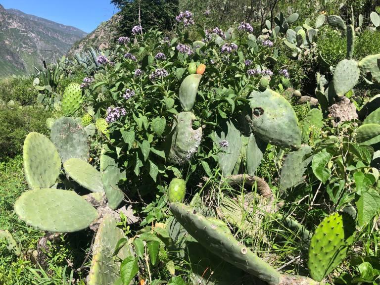 00011 colcahikecactus