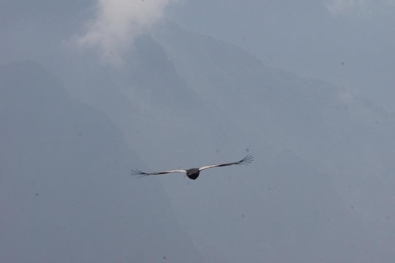 00022 condor achteraabzicht