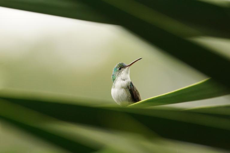 00046 kolibrie9