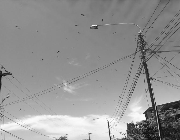 vogelsindelucht