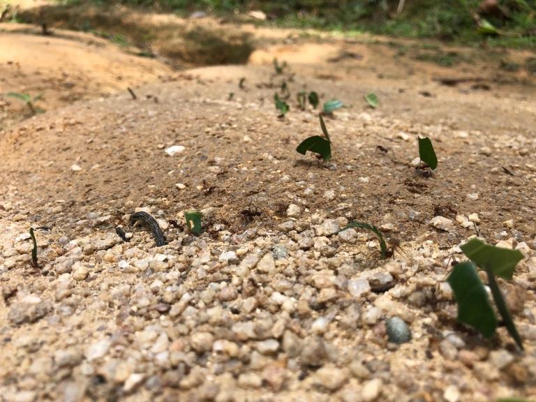 00033 mieren