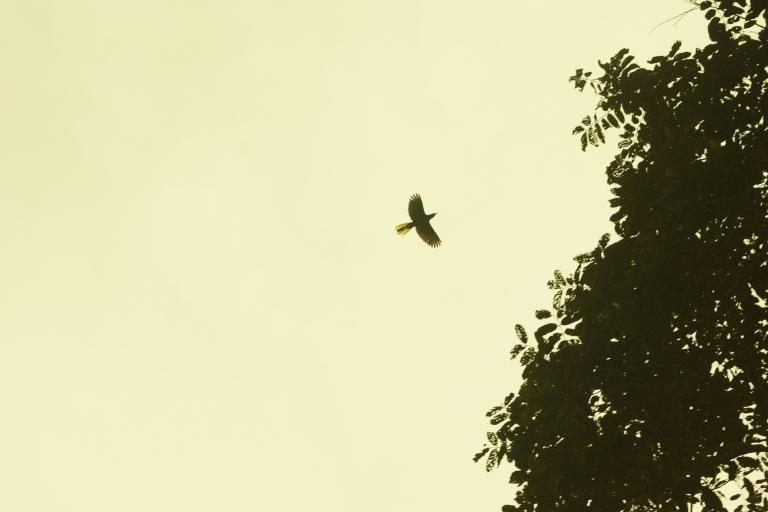 compivliegendevogelgelestaart