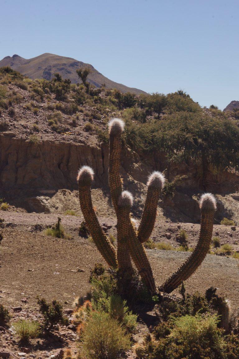 00001 cactus