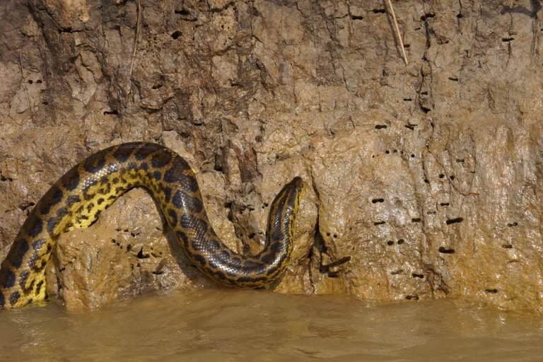 00011 anaconda2