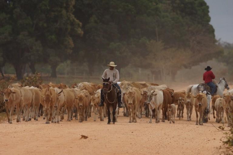 00058 koeien