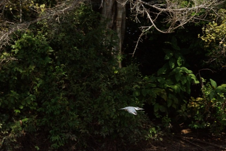 00147 ijsvogelvogelvlucht