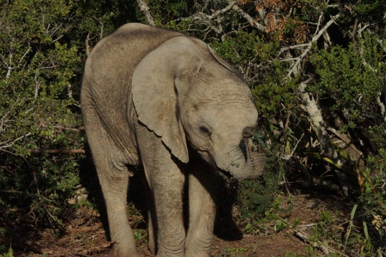 olifantmini