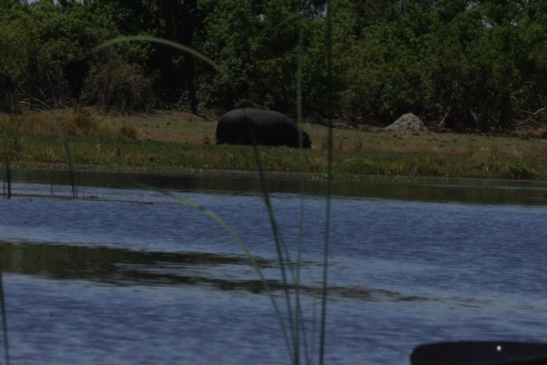 00028 nijlpaard