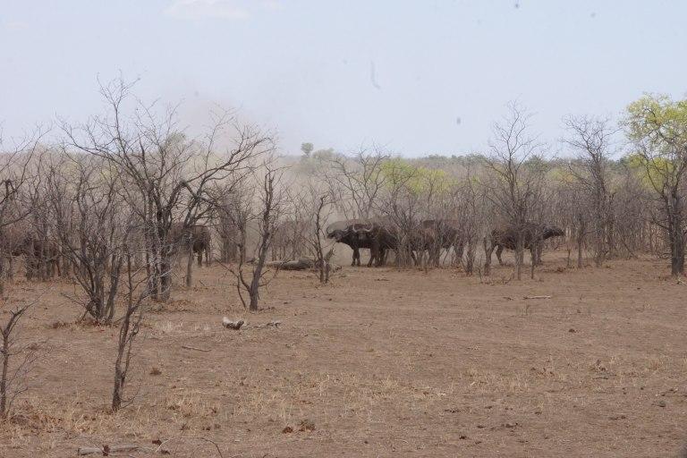 007 buffelgroep