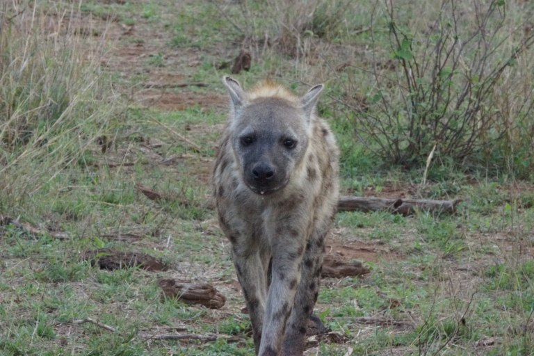 016 hyena2