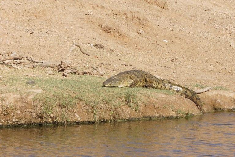 022 krokodil