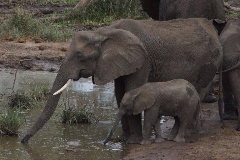 035 olifanten2