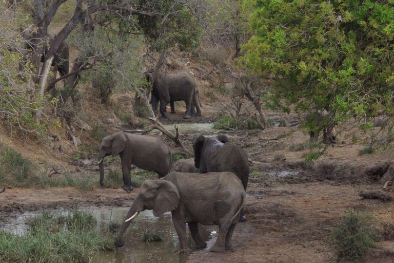 036 olifanten3
