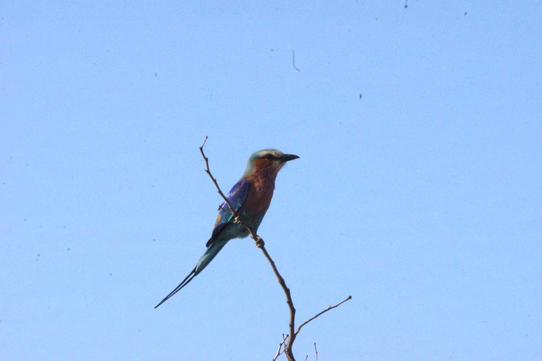 049 vogeltjekleurenveel