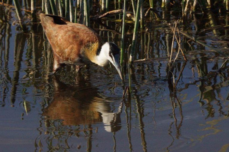059 watervogeljagend