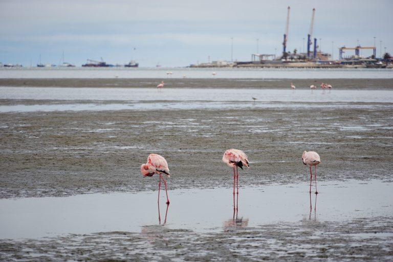 00028 flamingos2